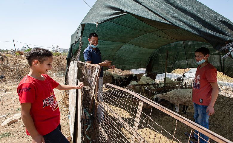 Sich um die Schafe zu kümmern, ist bei den Dar Mohammeds Männersache.